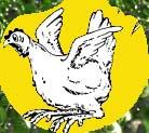 Chickbutton